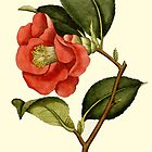 Rose Camellia Flower Botanical by Zehda