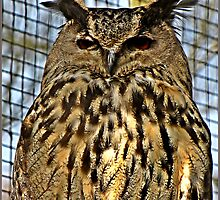 """"""" Eagle OWL"""" by Malcolm Chant"""