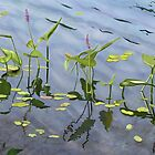 Pickerel Weed by Joan A Hamilton