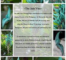 Jade Vine by Dennis  Stanton