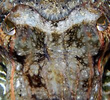 Cuttle Fish up close 2 by Marcus Grant IPA