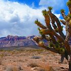 Red Rock Canyon Cactus by Eleu Tabares