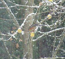 Bird in a winter tree #2 by Dawna Morton