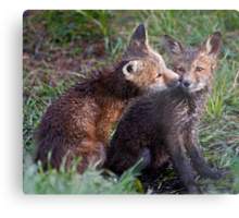 Fox Kits Drenched and Nuzzling Metal Print