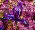 Little Iris by LudaNayvelt