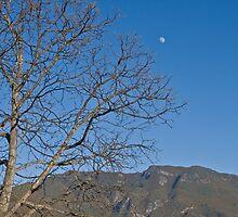 Moon by Naomi Brooks