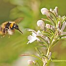 Coming in for Nectar by Richard Heeks