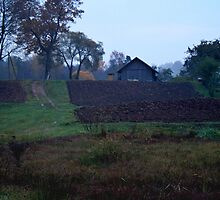 Countryscape in Morning by Antanas