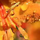 Golden Drops by Susan van Zyl