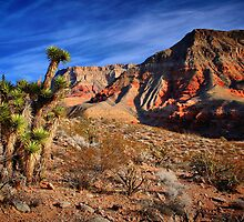 Arizona Wilderness by Jo Nijenhuis