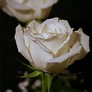 White Roses by Lori Walton