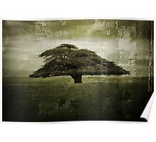 Desolate Tree Poster
