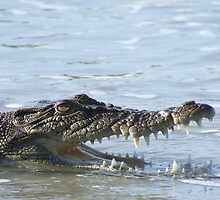 saltwater crocodile by jeroenvanveen