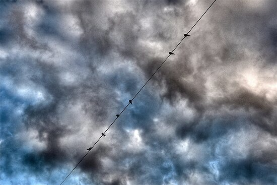 Birds on a wire- Avalon, Sydney, Australia. by Leigh Nelson
