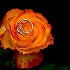 Wedding Rose by Bryn Jones