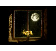 Moonlight and Daffodils Photographic Print