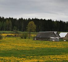 Countryscape in Day by Antanas