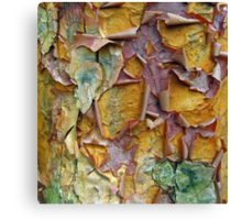 Paper Bark Abstract 2 Canvas Print