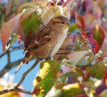 Bird at Spring Mill Inn by mltrue
