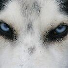 I got My Eye on You! by Deon de Waal