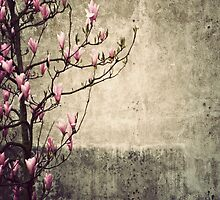 _ magnolia _ by Louise LeGresley