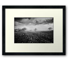 Trees in a Misty Field Framed Print