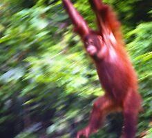 Orangutan, Sepilok Malaysia by Mishimoto
