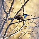 Grackle Beauty by Deborah  Benoit