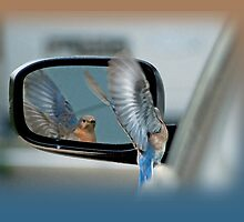 Bluebird in my Rear View Mirror by Bonnie T.  Barry