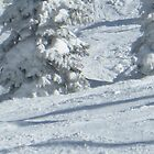 Snowy Trees Atop The Ski Mountain by garywallabr