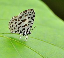 Little Forest Pierrot 2 by Tony Wong