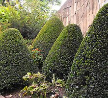 Topiary Garden by MandyJ