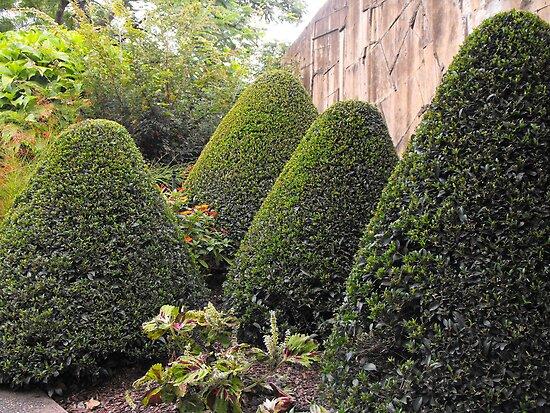 Topiary Garden by MandyJ