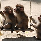 Monkeys of Japan by gottheshot