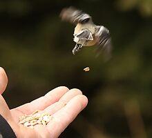 Fly Away Birdie... Fly Away by SeRVE