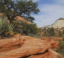 Zion Afternoon by Stephen Vecchiotti