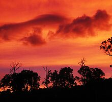 Tangerine Sky ~ unframed by Magicat