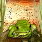 Froggy Heaven by Holly Kempe
