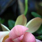 Fallen Lotus by gustinegirl