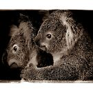Koala Mother and Joey by Shannon Plummer