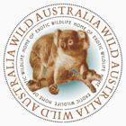 Australia Koala Bear by Zehda