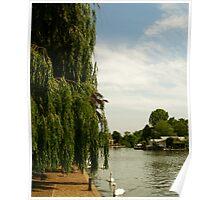 riverbank Poster