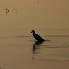 Morning Ducky by Martina Fagan