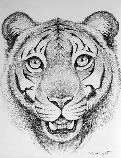 Tiger Head by sally seabright