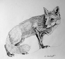 Fox by sally seabright