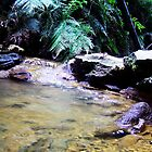Rainforest Stream. by Finell McEwen