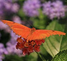 Julia Butterfly on Lantana by Adam Bykowski