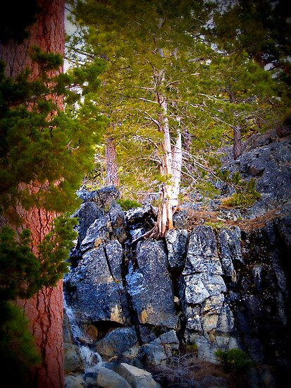 Rock Tree by Steve Hunter