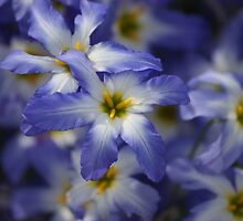 blue ones by Mark Thompson