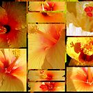 Hibiscus Lovers .. by Isa Rodriguez